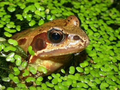 Attracting frogs into your garden