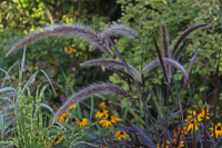 AUGUST – HTA PLANT OF THE MOMENT GET CREATIVE WITH ORNAMENTAL GRASSES