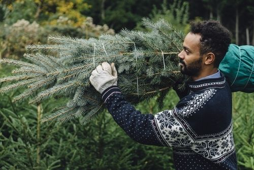 Guide to choosing the right Christmas Tree