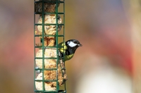 Spread the word on wildlife in your garden