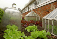 Use cloches to protect overwintering crops