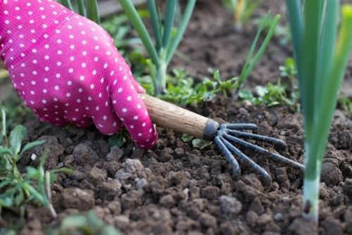 What to do in the garden in March?